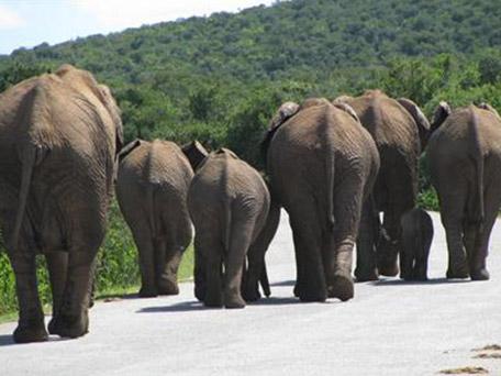 Leuke vakantie met de kinderen naar Zuid Afrika